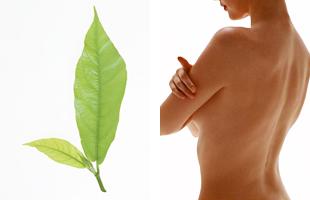 「びわの葉温灸治療」始めました。